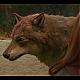 Новолуние Кадр из фильма.  Нажми на картинку - увидишь следующую.
